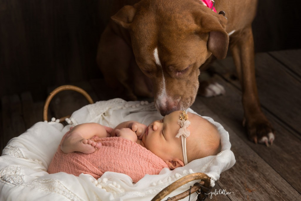 Newborn dog photo