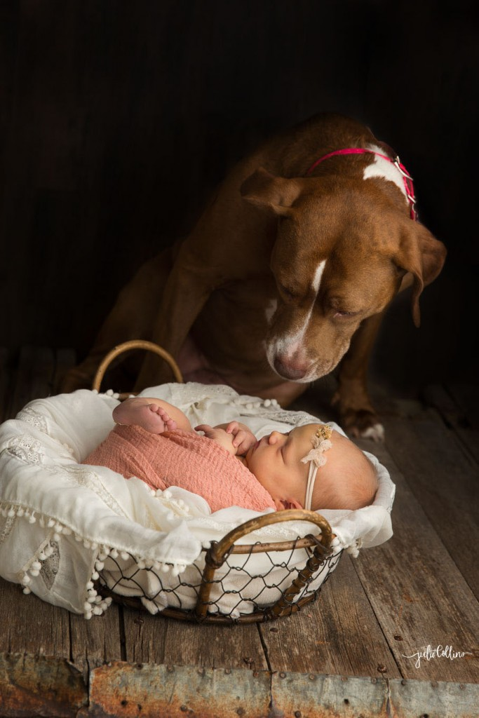 Newborn pet photographer Wisconsin