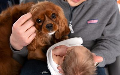 Sussex Newborn Photographer   Meet Grant
